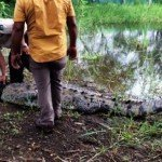 Crocodiles in the Surf: Costa Ricans Take Action